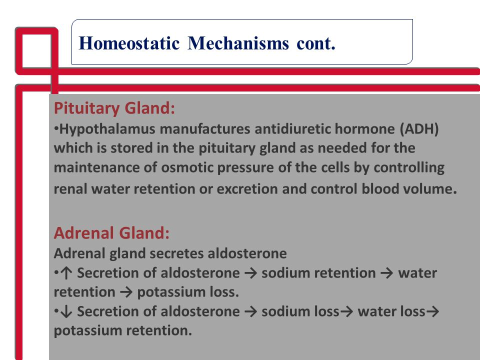 Homeostatic Mechanisms cont.