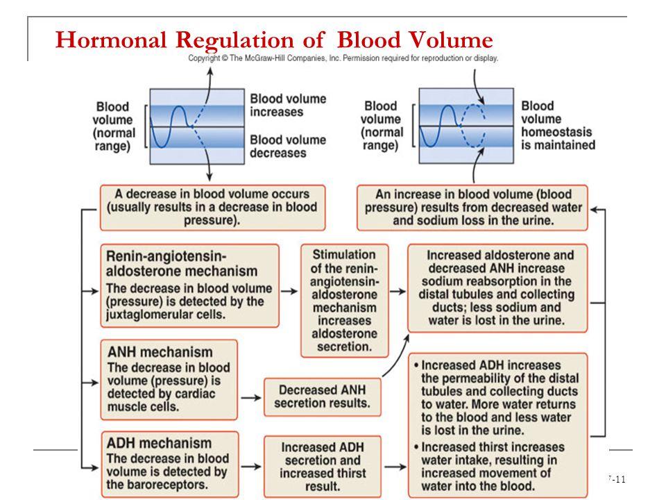 Hormonal Regulation of Blood Volume