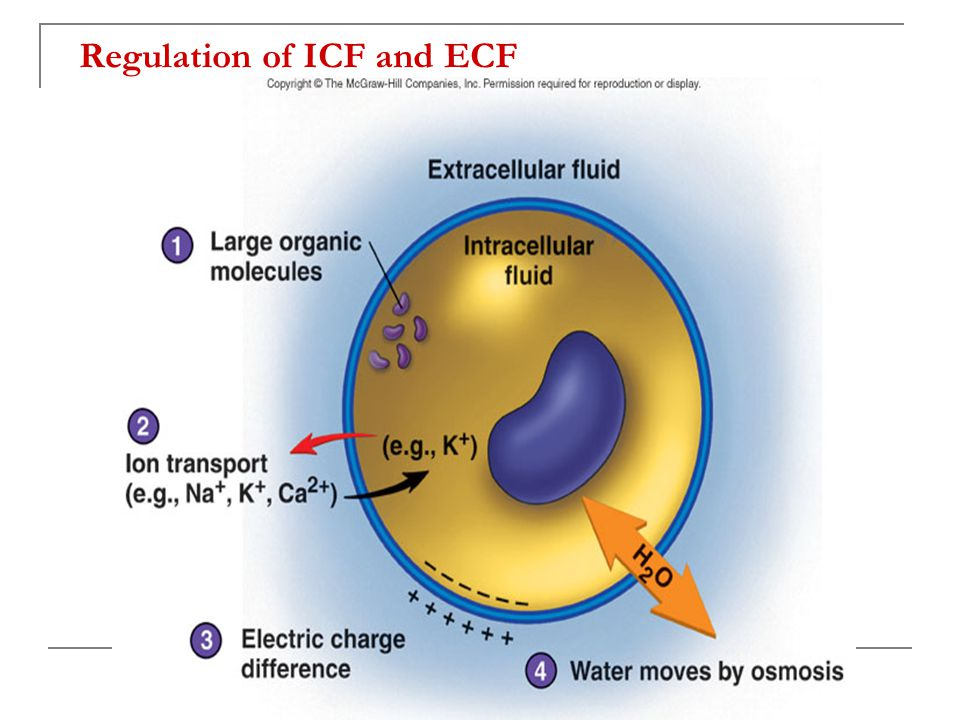 Regulation of ICF and ECF