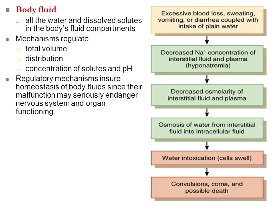 Body fluid all the water and dissolved solutes in the body's fluid compartments. Mechanisms regulate.