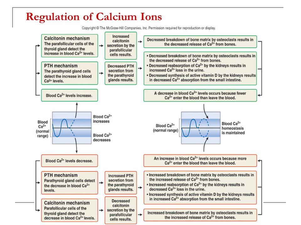 Regulation of Calcium Ions