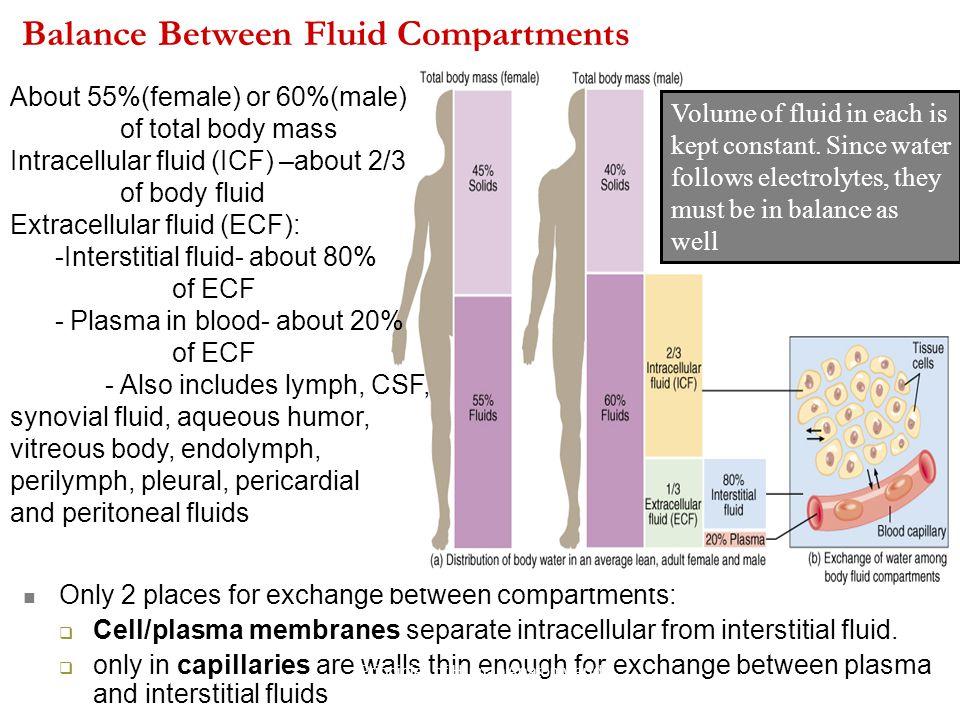 Balance Between Fluid Compartments