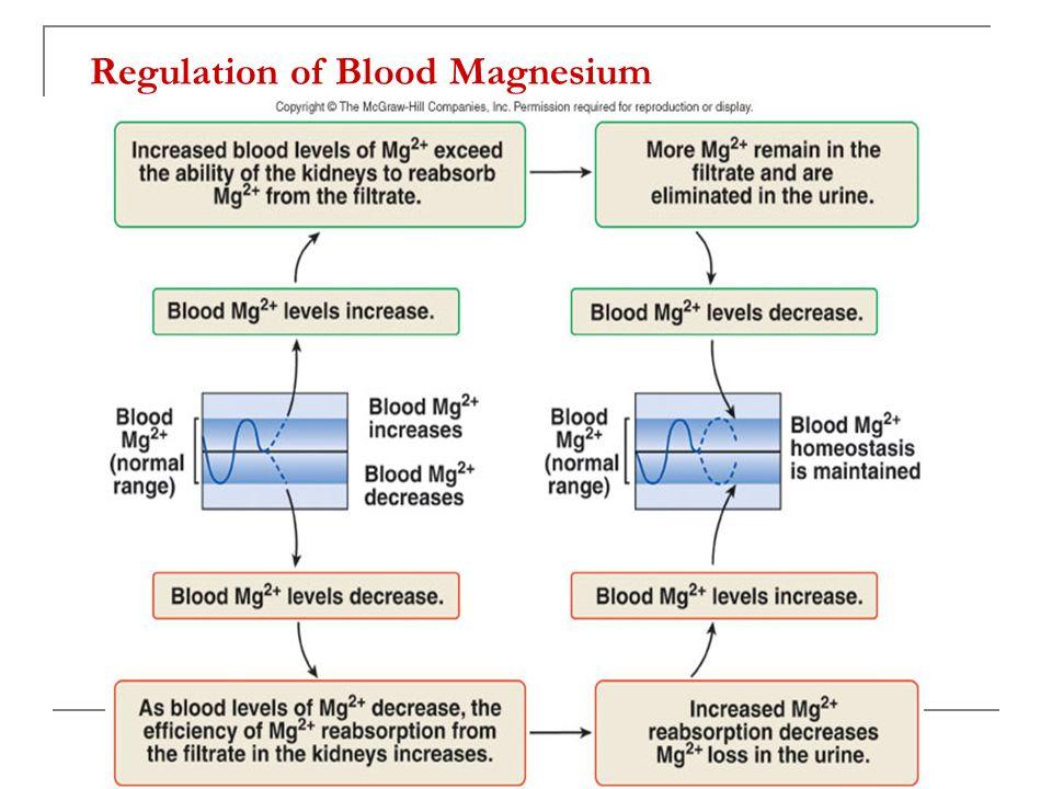 Regulation of Blood Magnesium