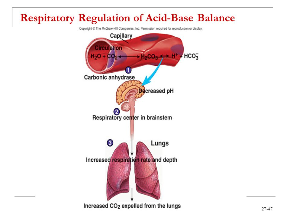 Respiratory Regulation of Acid-Base Balance