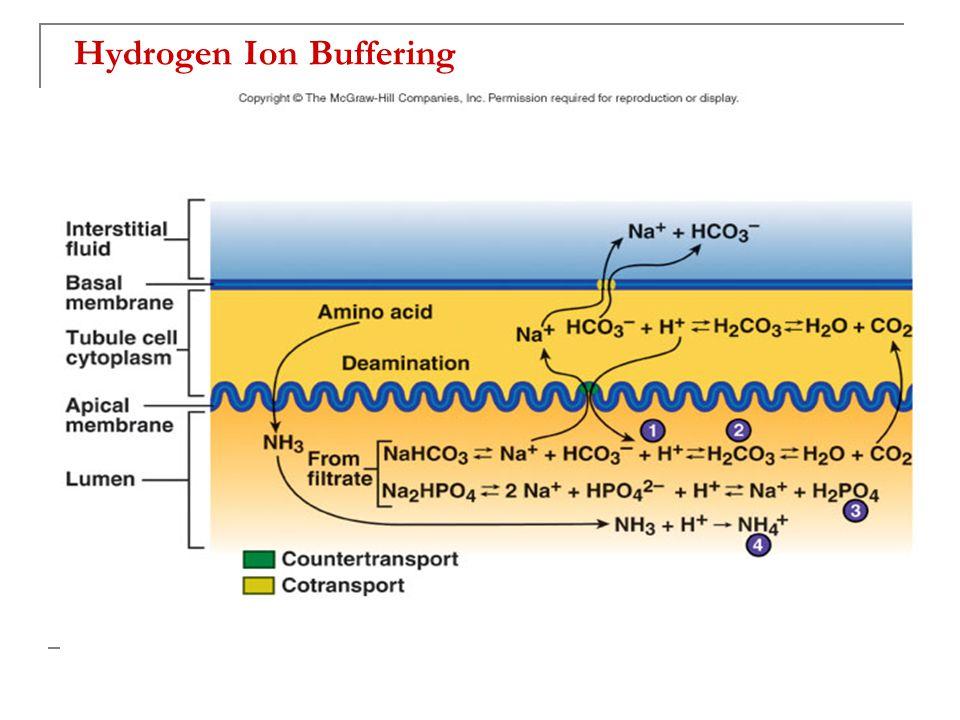 Hydrogen Ion Buffering