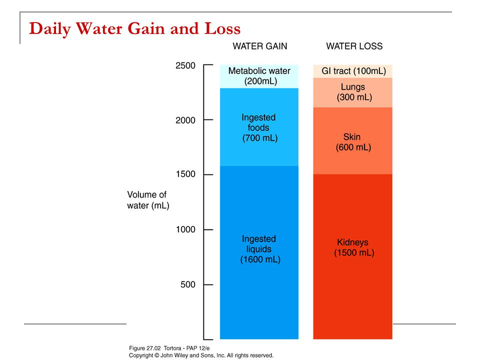 Daily Water Gain and Loss