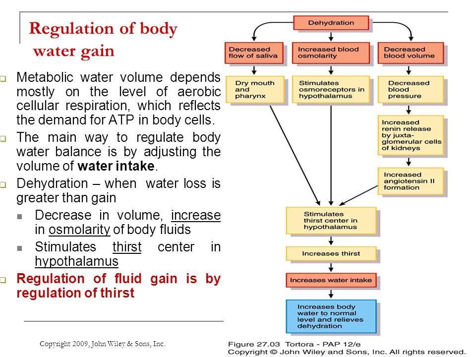 Regulation of body water gain