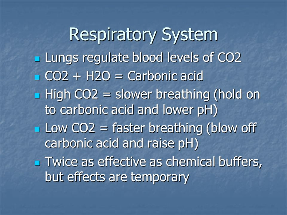 Respiratory System Lungs regulate blood levels of CO2