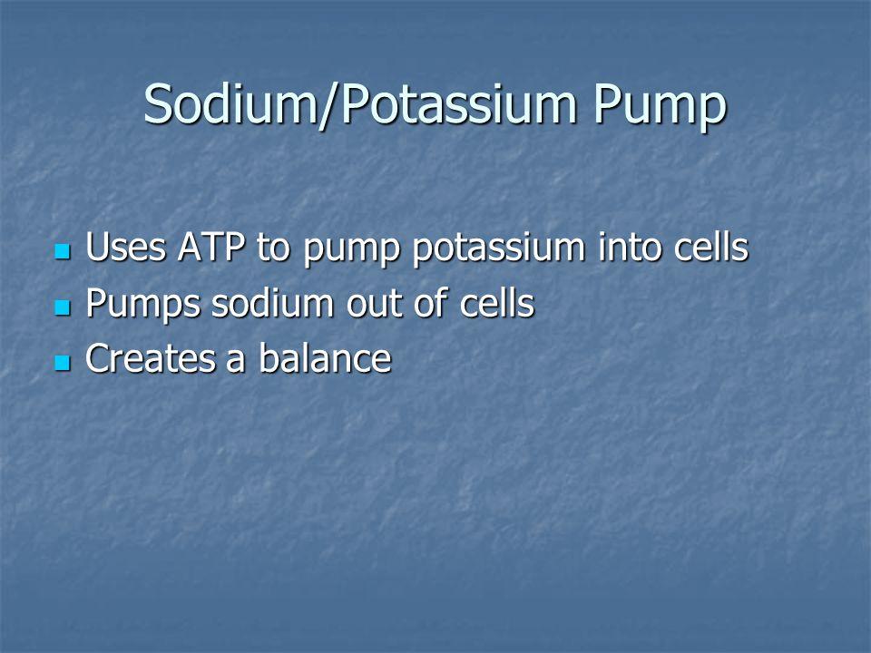 Sodium/Potassium Pump