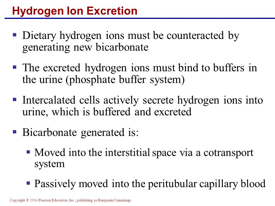 Hydrogen Ion Excretion