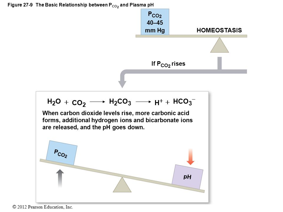 Figure 27-9 The Basic Relationship between PCO2 and Plasma pH