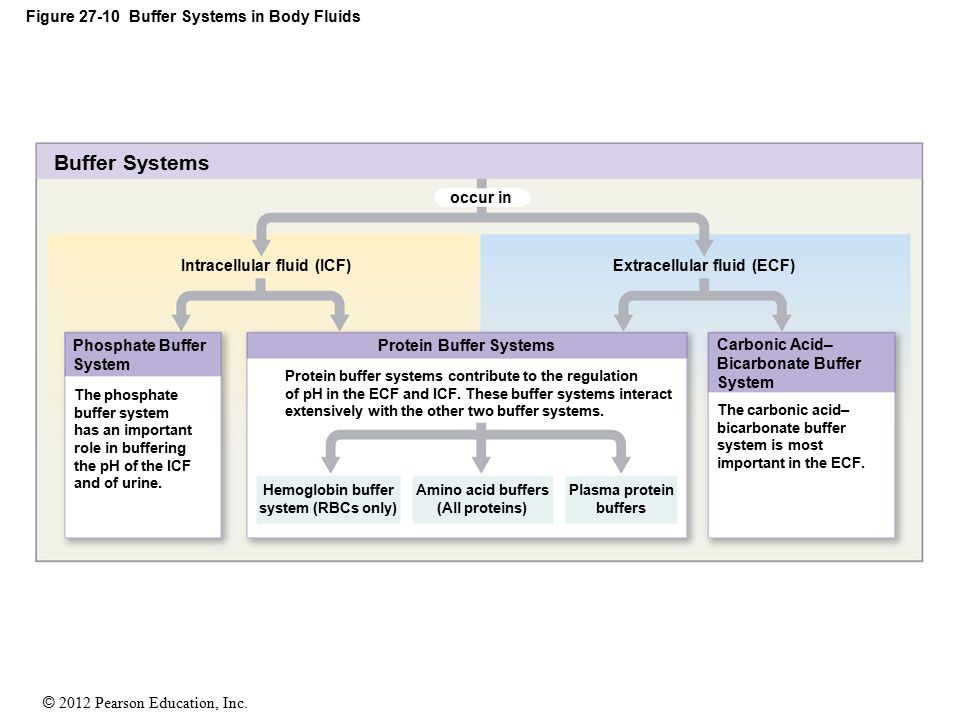 Figure 27-10 Buffer Systems in Body Fluids