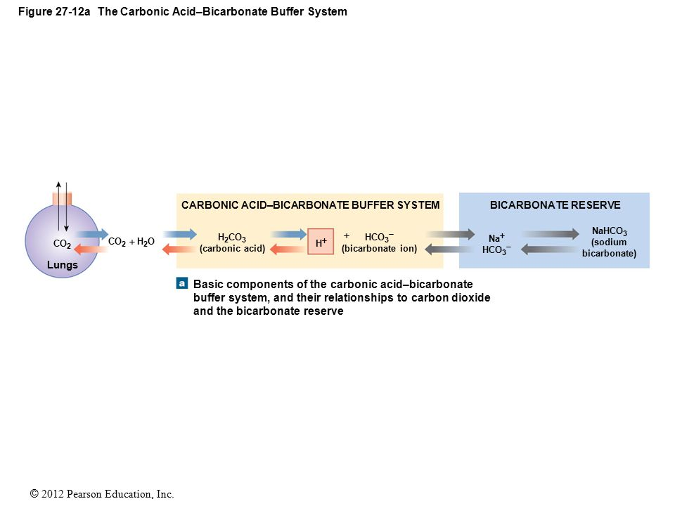 Figure 27-12a The Carbonic Acid–Bicarbonate Buffer System