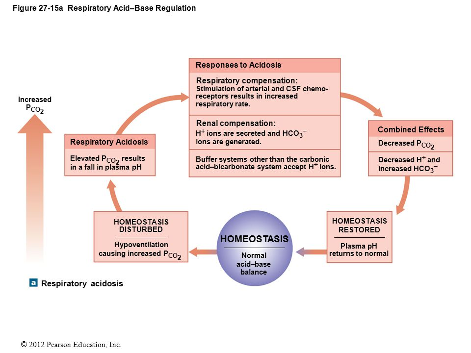Figure 27-15a Respiratory Acid–Base Regulation