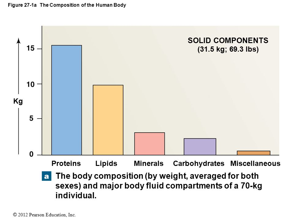 Figure 27-1a The Composition of the Human Body
