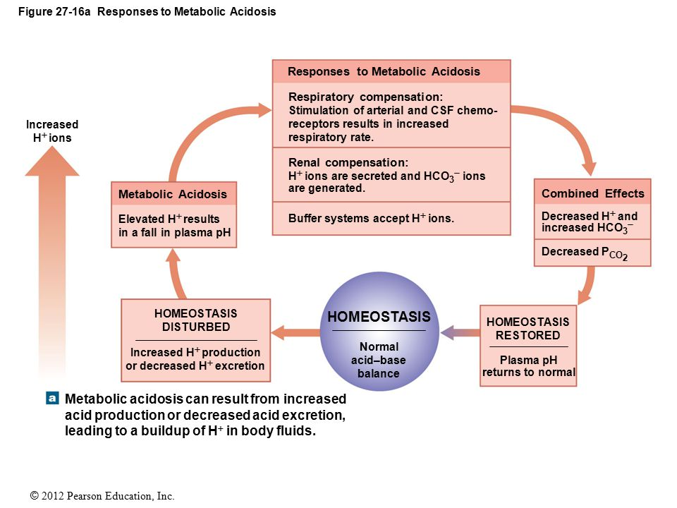 Figure 27-16a Responses to Metabolic Acidosis