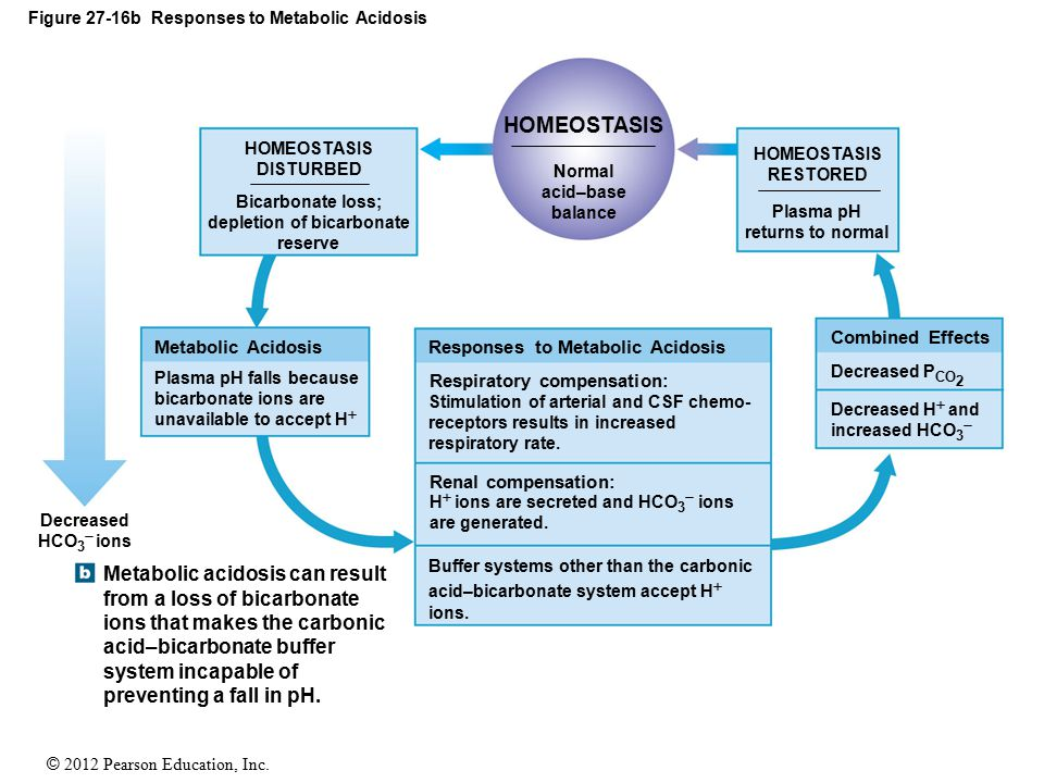 Figure 27-16b Responses to Metabolic Acidosis