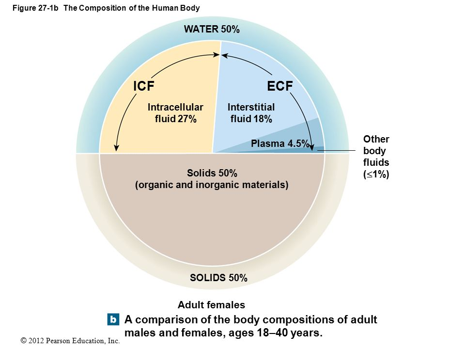Figure 27-1b The Composition of the Human Body