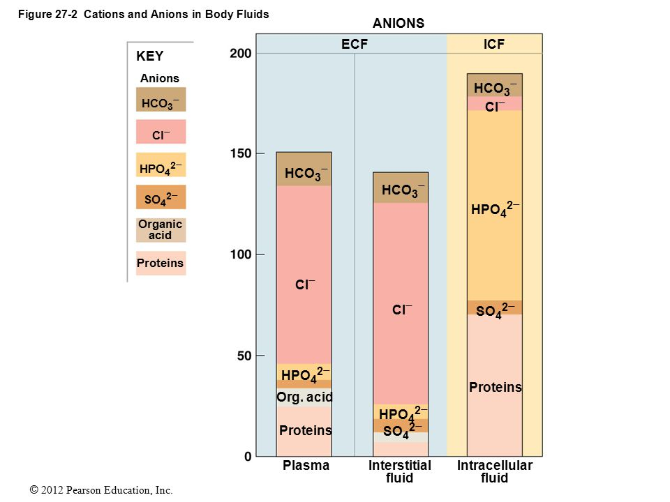 Figure 27-2 Cations and Anions in Body Fluids