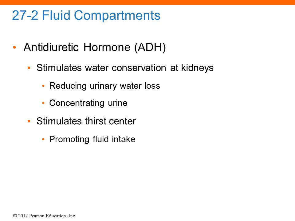 27-2 Fluid Compartments Antidiuretic Hormone (ADH)