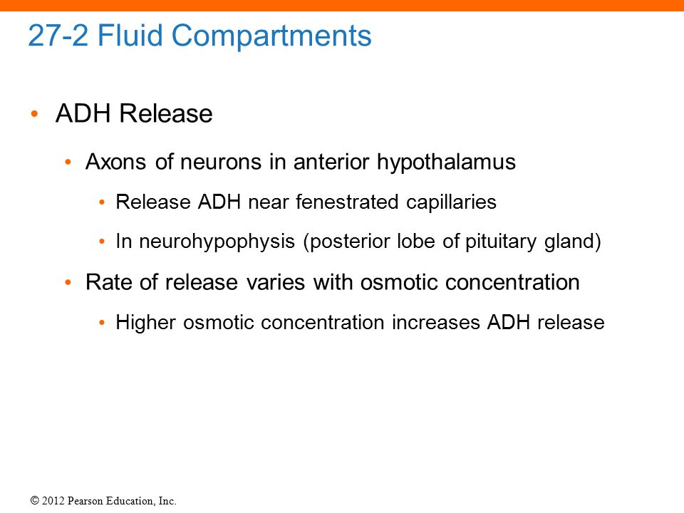 27-2 Fluid Compartments ADH Release