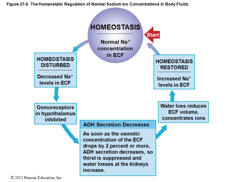HOMEOSTASIS Start Normal Na concentration in ECF