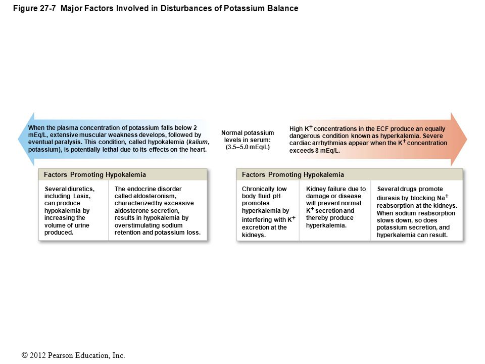 Figure 27-7 Major Factors Involved in Disturbances of Potassium Balance