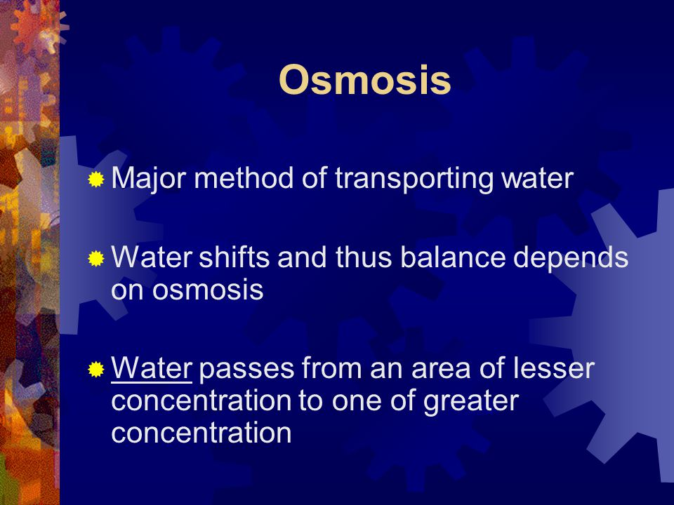 Osmosis Major method of transporting water