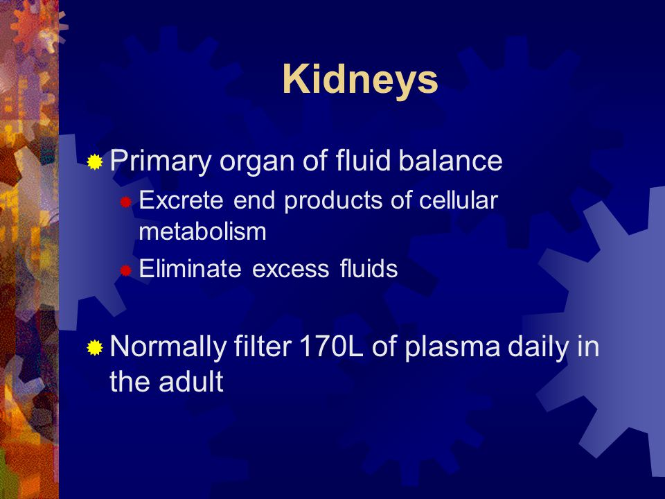 Kidneys Primary organ of fluid balance