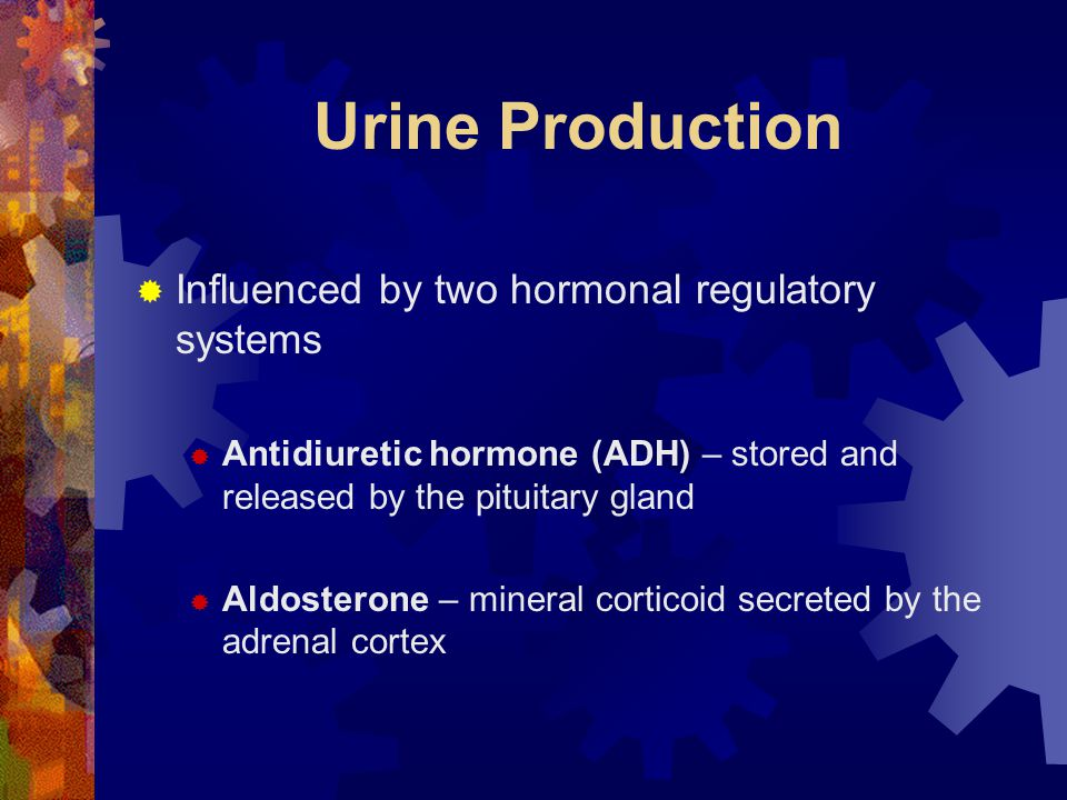 Urine Production Influenced by two hormonal regulatory systems