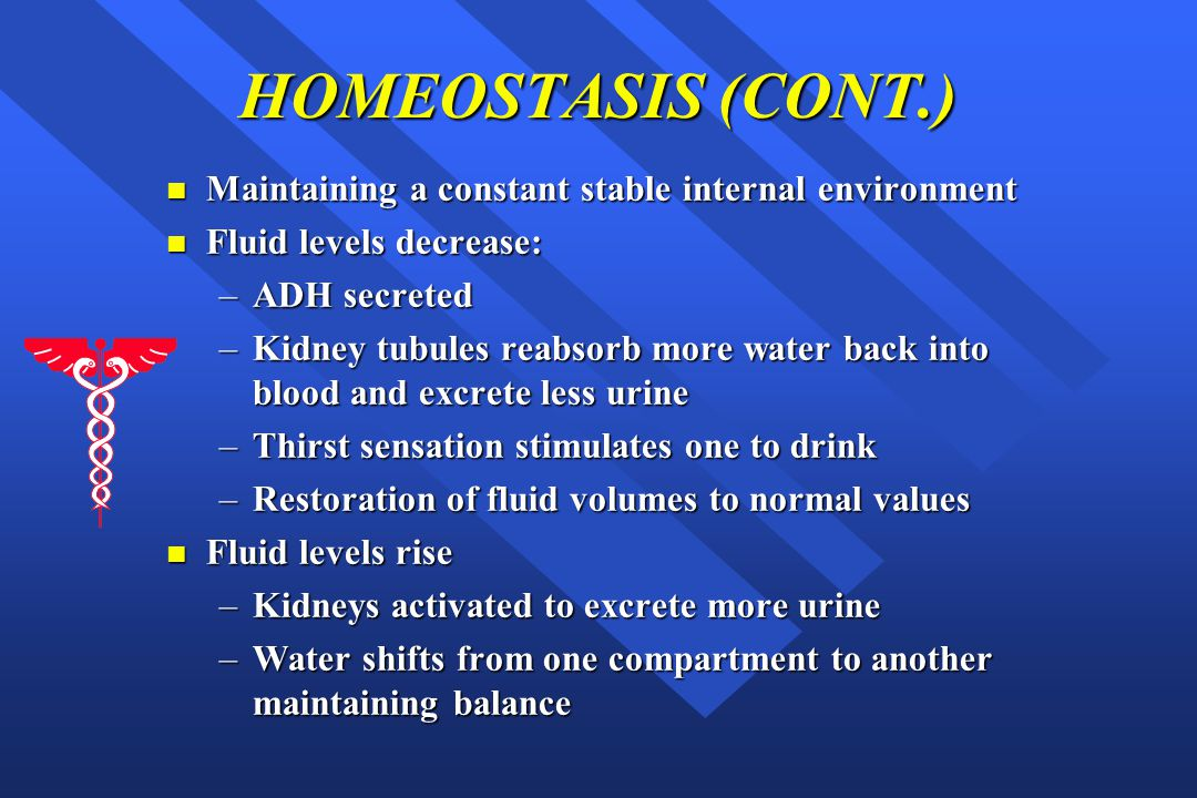 HOMEOSTASIS (CONT.) Maintaining a constant stable internal environment