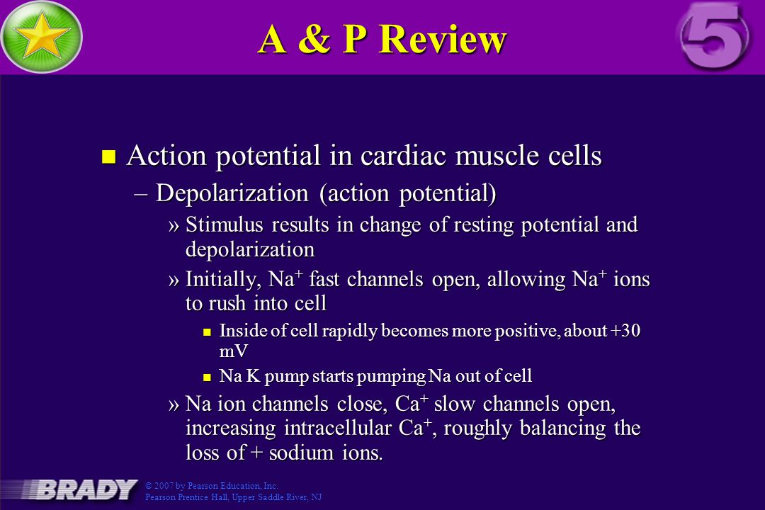 A & P Review Action potential in cardiac muscle cells