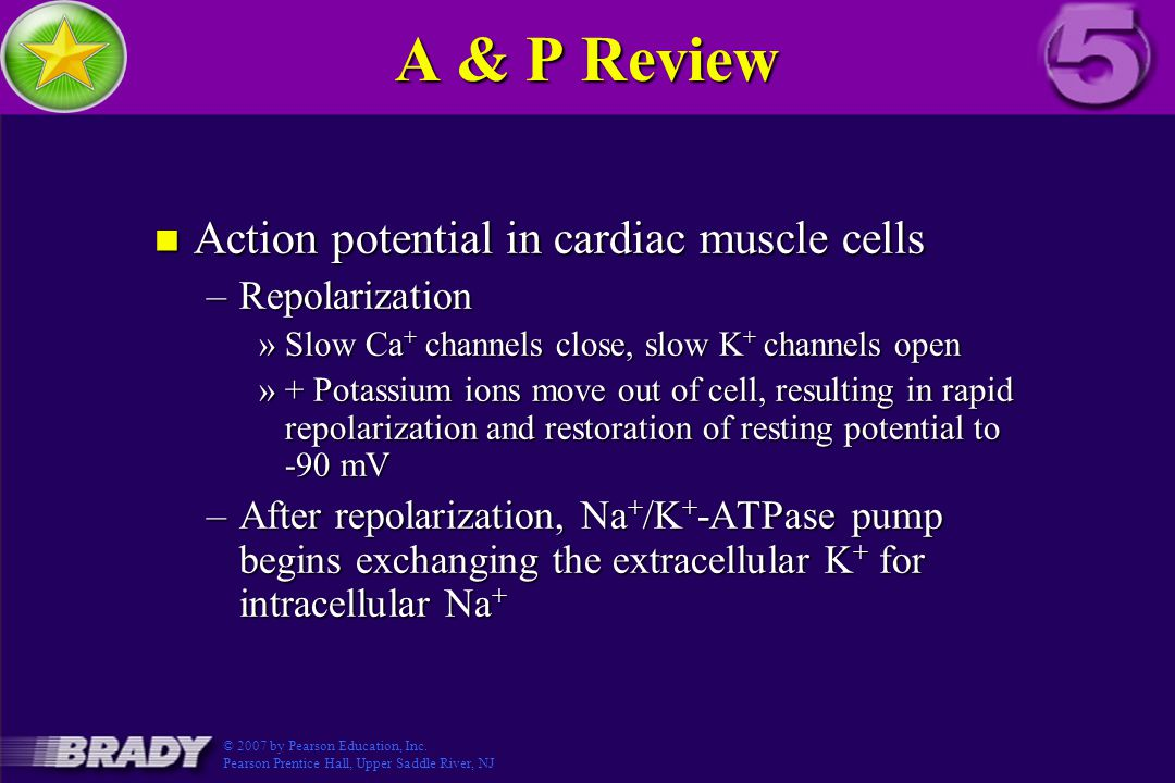A & P Review Action potential in cardiac muscle cells Repolarization