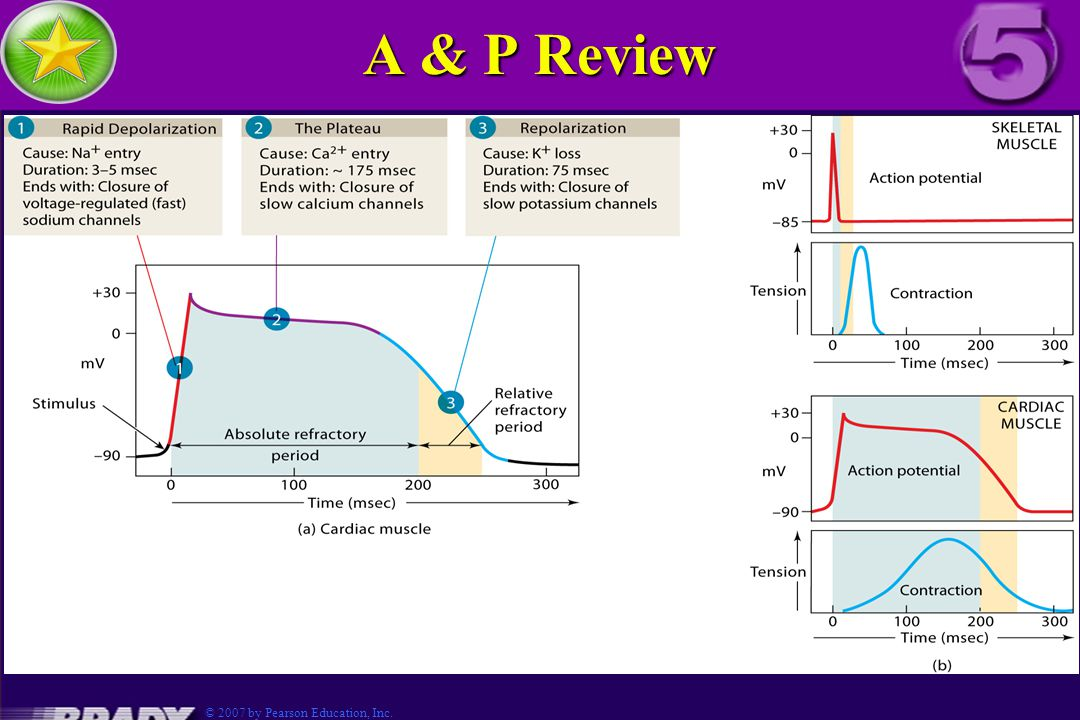 A & P Review Fig 3.5-4 © 2007 by Pearson Education, Inc.