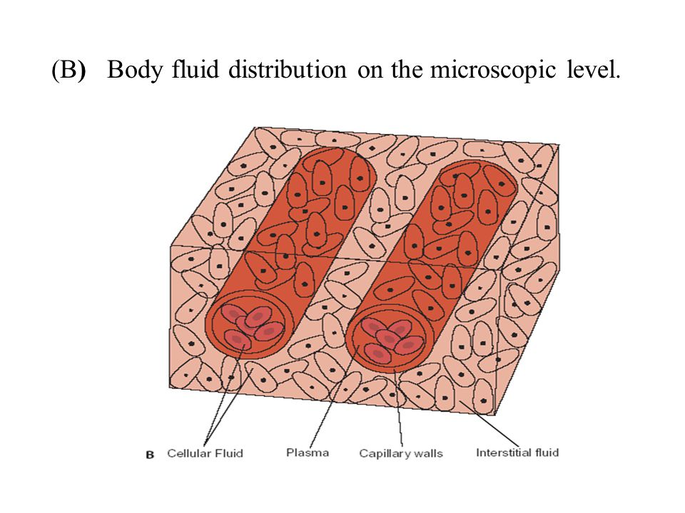 (B) Body fluid distribution on the microscopic level.