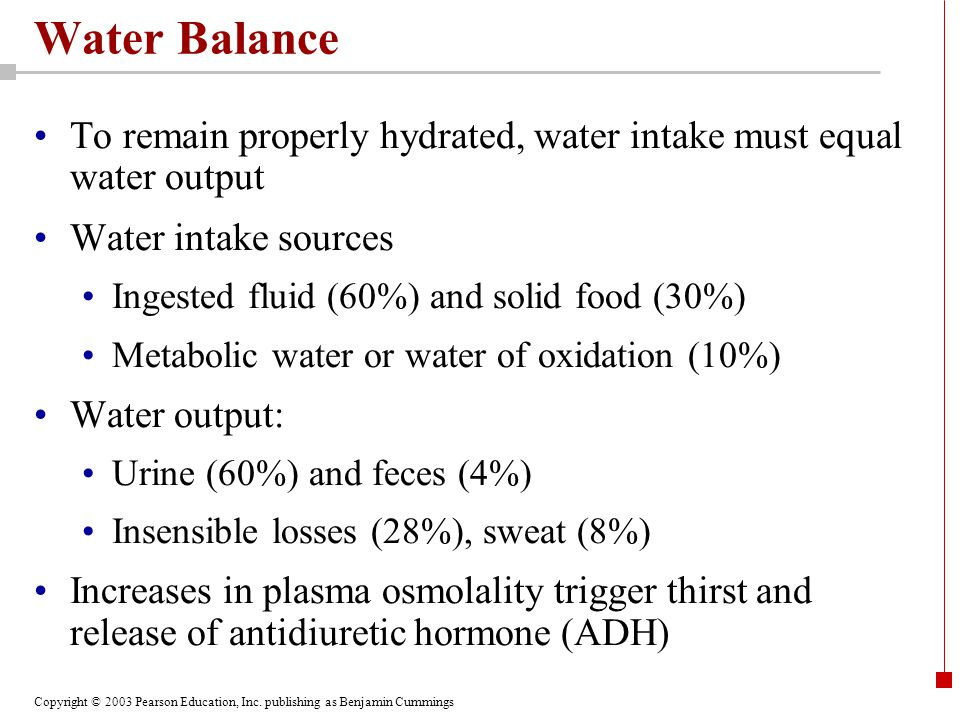 Water Balance To remain properly hydrated, water intake must equal water output. Water intake sources.