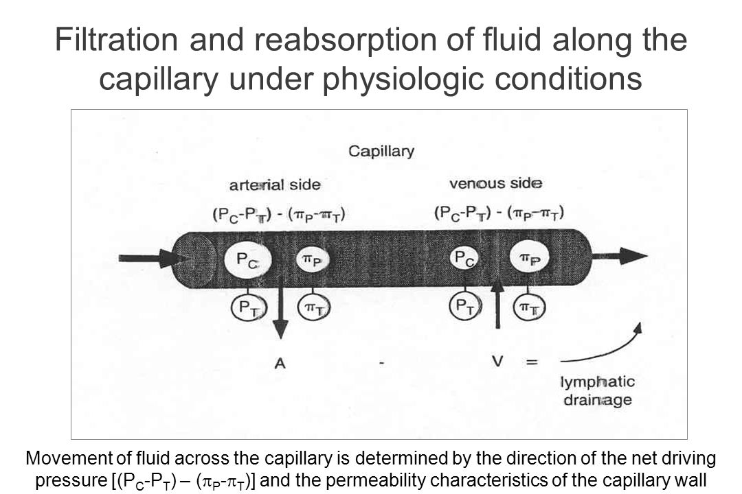 Filtration and reabsorption of fluid along the capillary under physiologic conditions