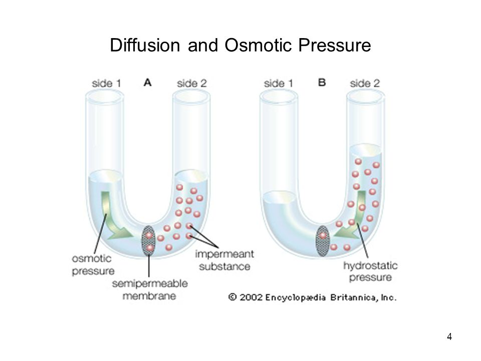 Diffusion and Osmotic Pressure
