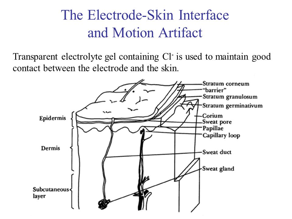 The Electrode-Skin Interface and Motion Artifact