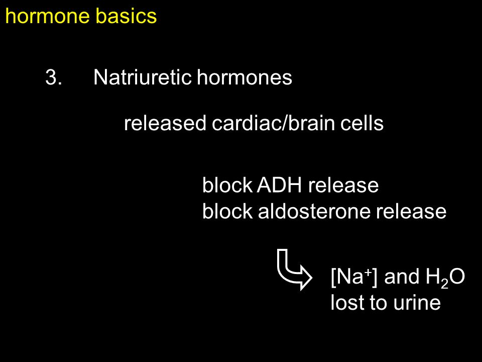 hormone basics 3. Natriuretic hormones. released cardiac/brain cells. block ADH release. block aldosterone release.