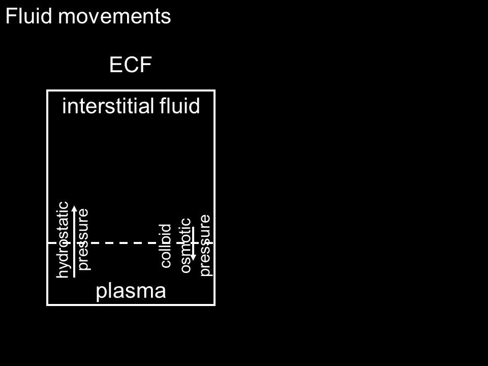Fluid movements ECF interstitial fluid plasma hydrostatic pressure