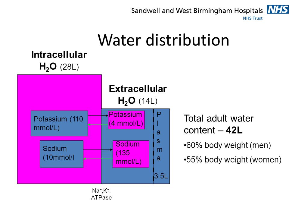 Water distribution Intracellular H2O (28L) Extracellular H2O (14L)