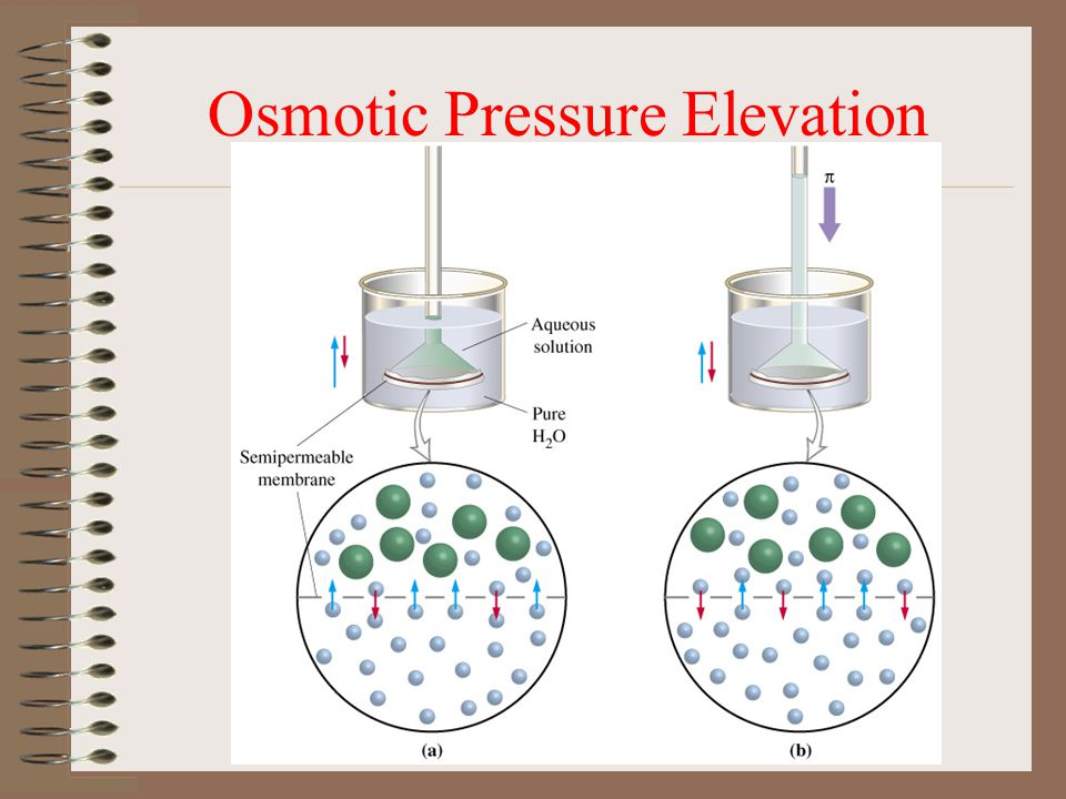 Osmotic Pressure Elevation