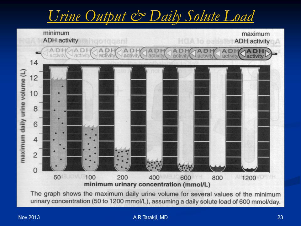 Urine Output & Daily Solute Load