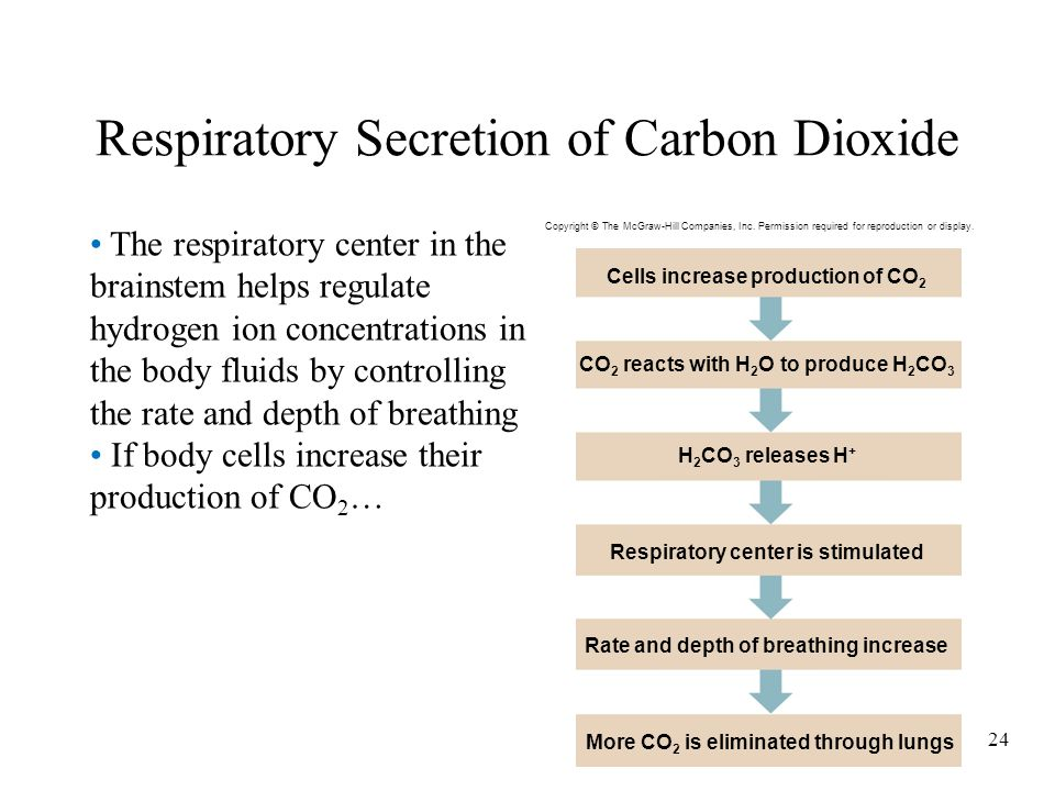 Respiratory Secretion of Carbon Dioxide