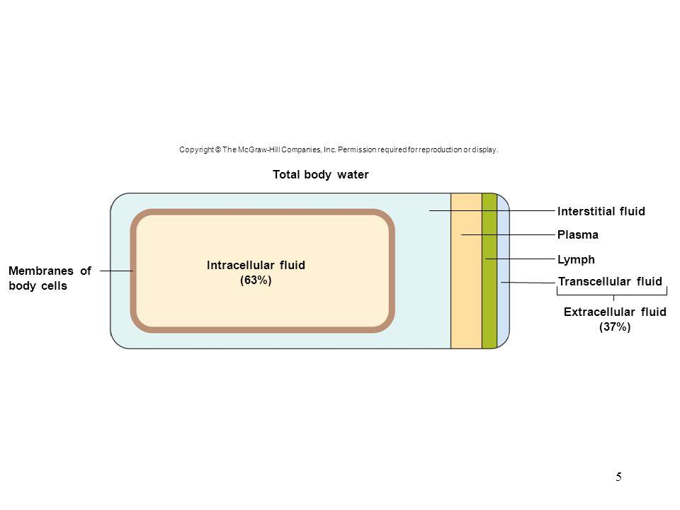 Intracellular fluid (63%) Extracellular fluid (37%)