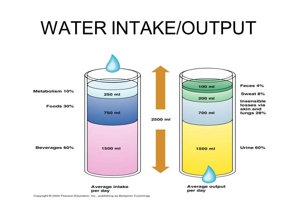 WATER INTAKE/OUTPUT