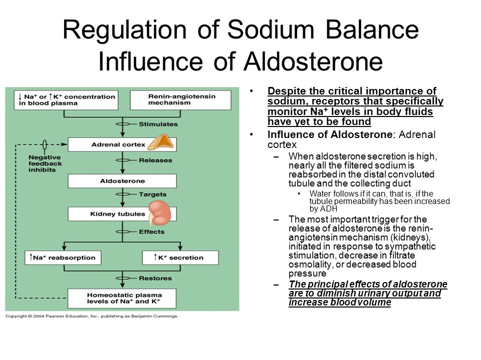 Regulation of Sodium Balance Influence of Aldosterone