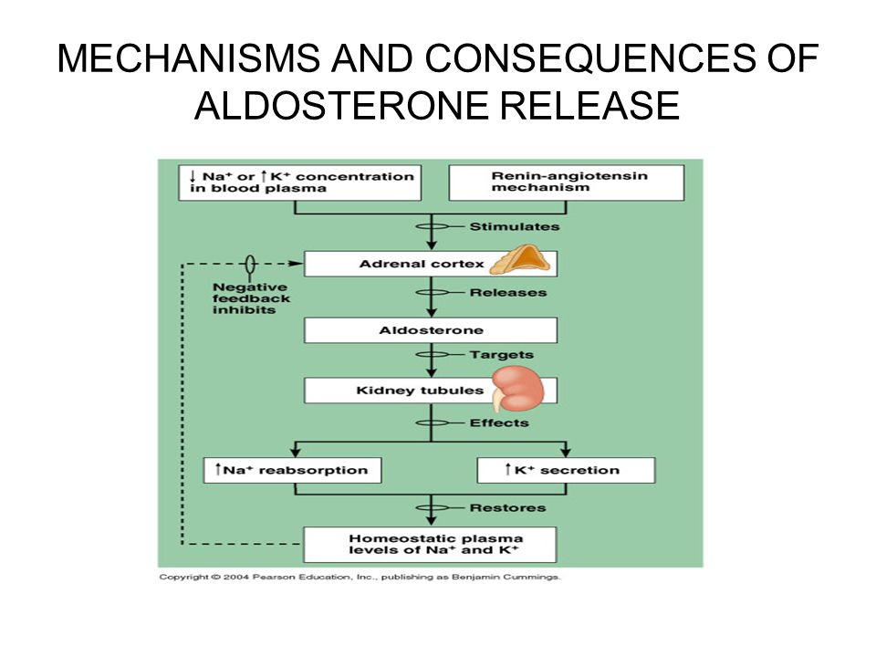 MECHANISMS AND CONSEQUENCES OF ALDOSTERONE RELEASE