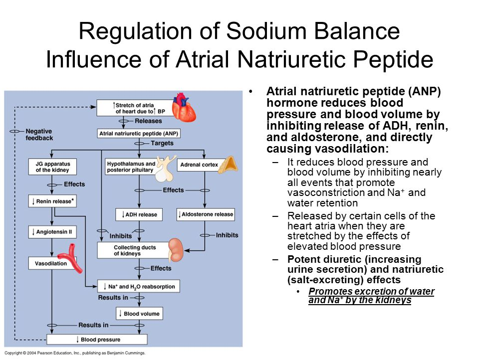 Regulation of Sodium Balance Influence of Atrial Natriuretic Peptide
